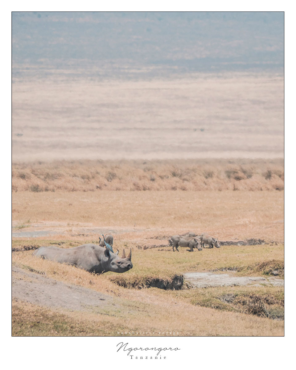 Safari en Tanzanie cratère Ngorongoro rhinocéros noir