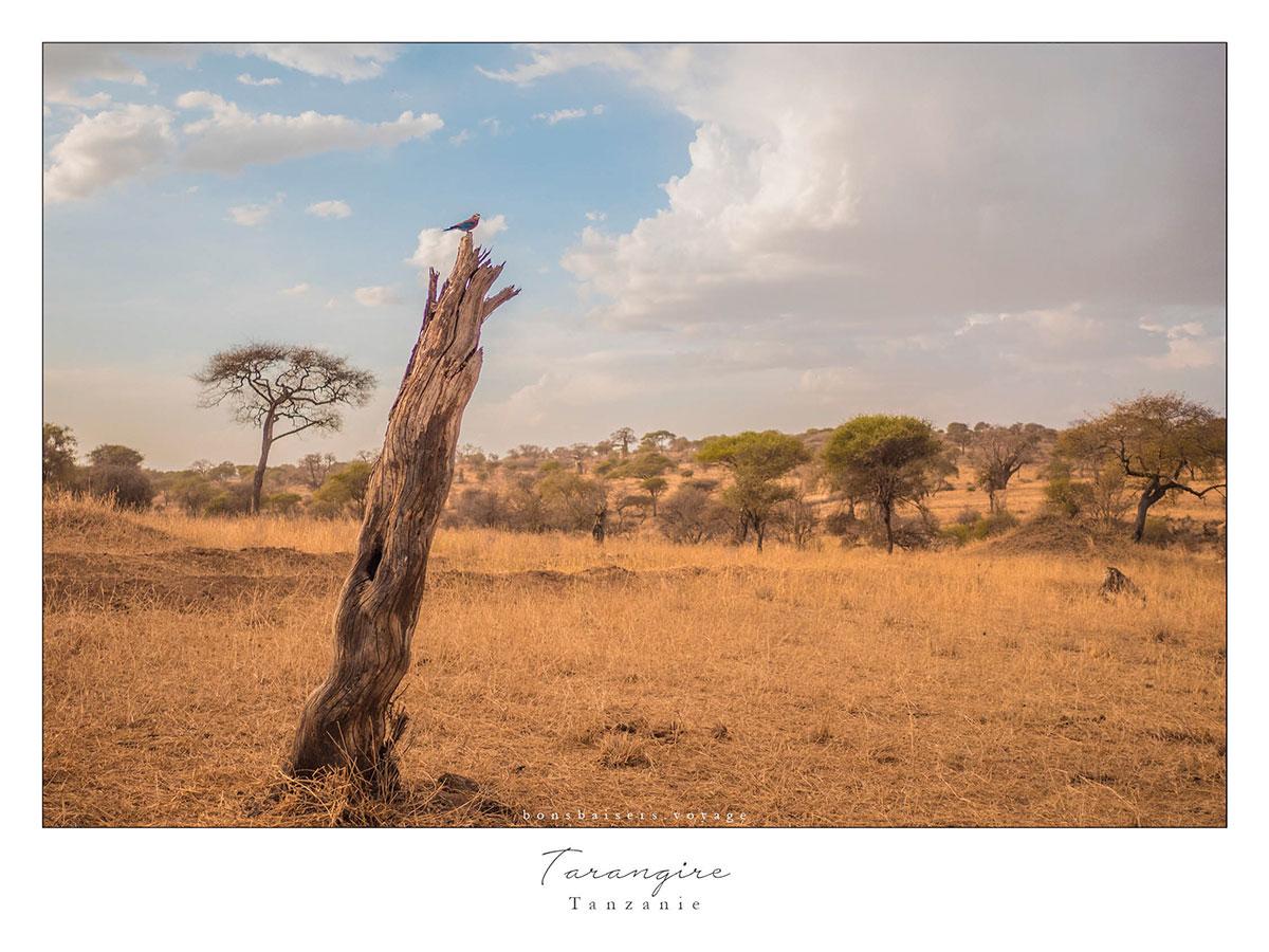 Safari en Tanzanie Tarangire oiseau