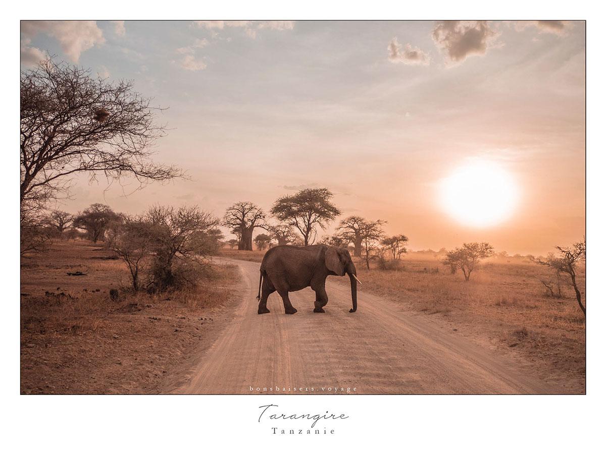 Safari En Tanzanie Tarangire Lphant
