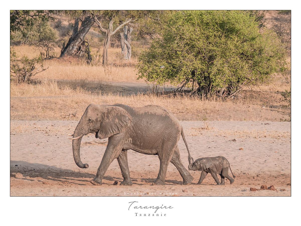 Safari en Tanzanie Tarangire éléphant